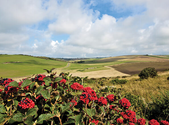 Discover the South Downs Offer Image