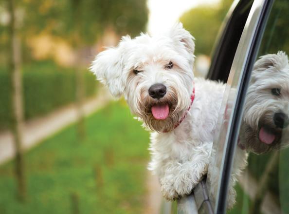 Dog Friendly Stays Offer Image