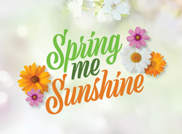 Spring Breaks in North Yorkshire Offer Image